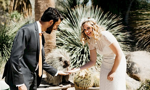 Animal encounters allow a hedgehog to give your congratulations on your wedding day.