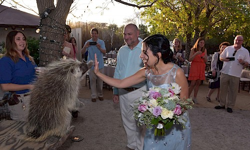 Animal encounter liven up the wedding reception.