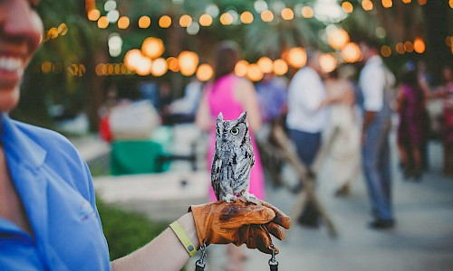 Animal encounters bring smiles to your event.