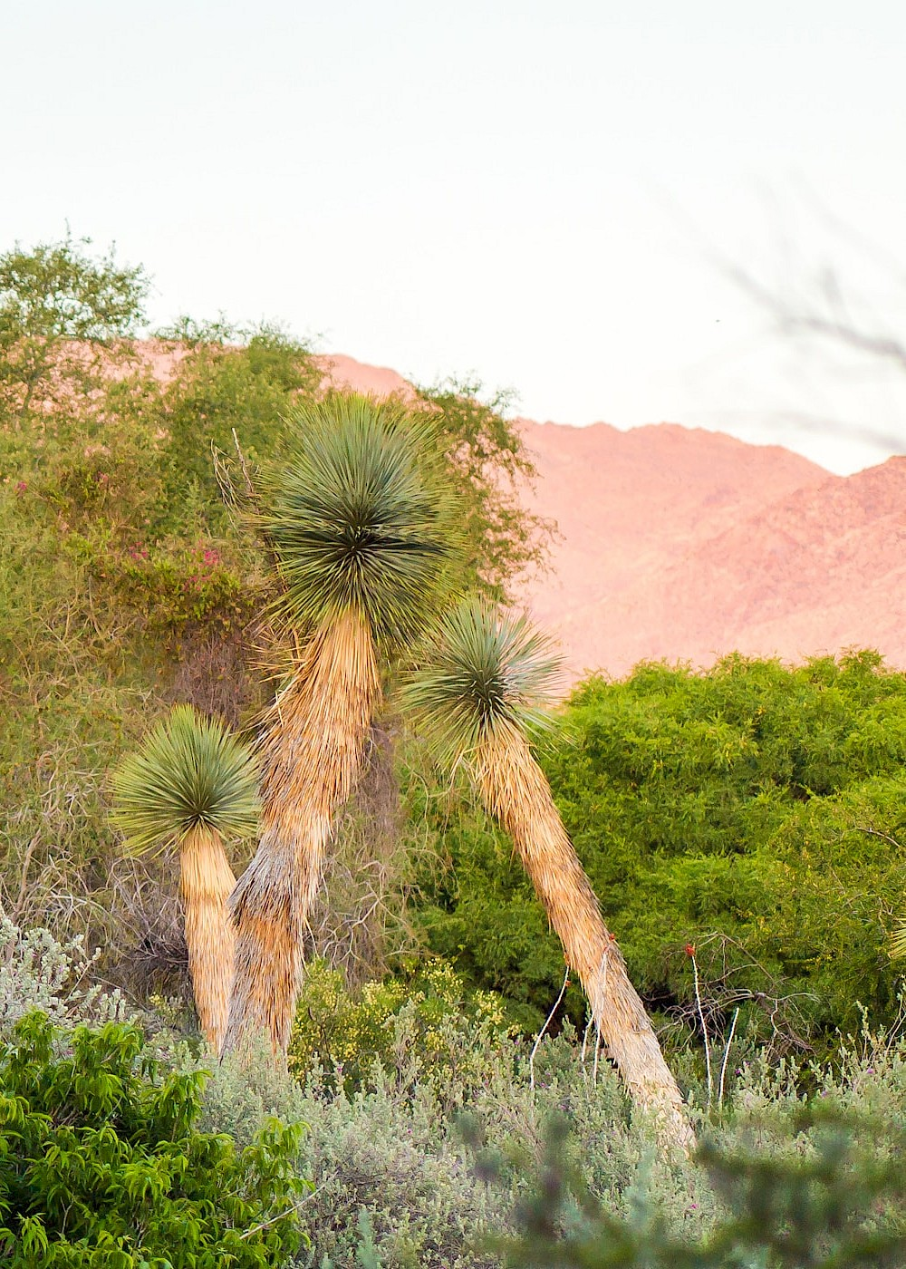 Botanical gardens and desert landscape at The Living Desert Zoo and Gardens.