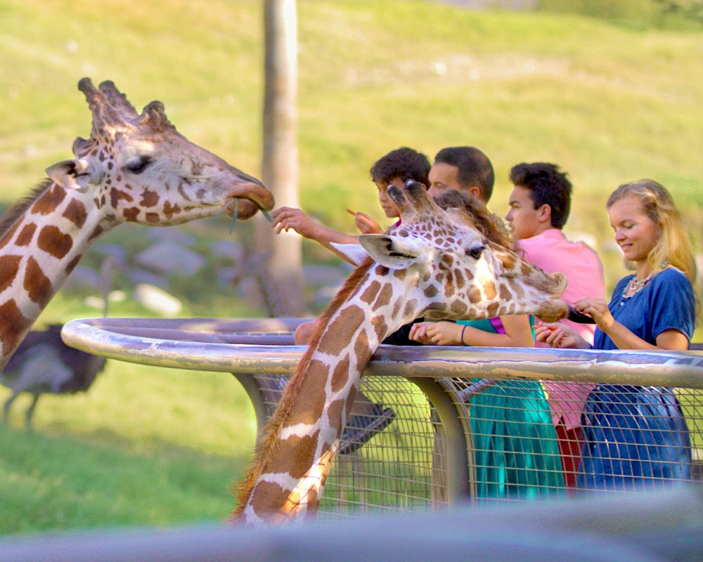 Explore the variety of things to do when visiting The Living Desert Zoo and Gardens.