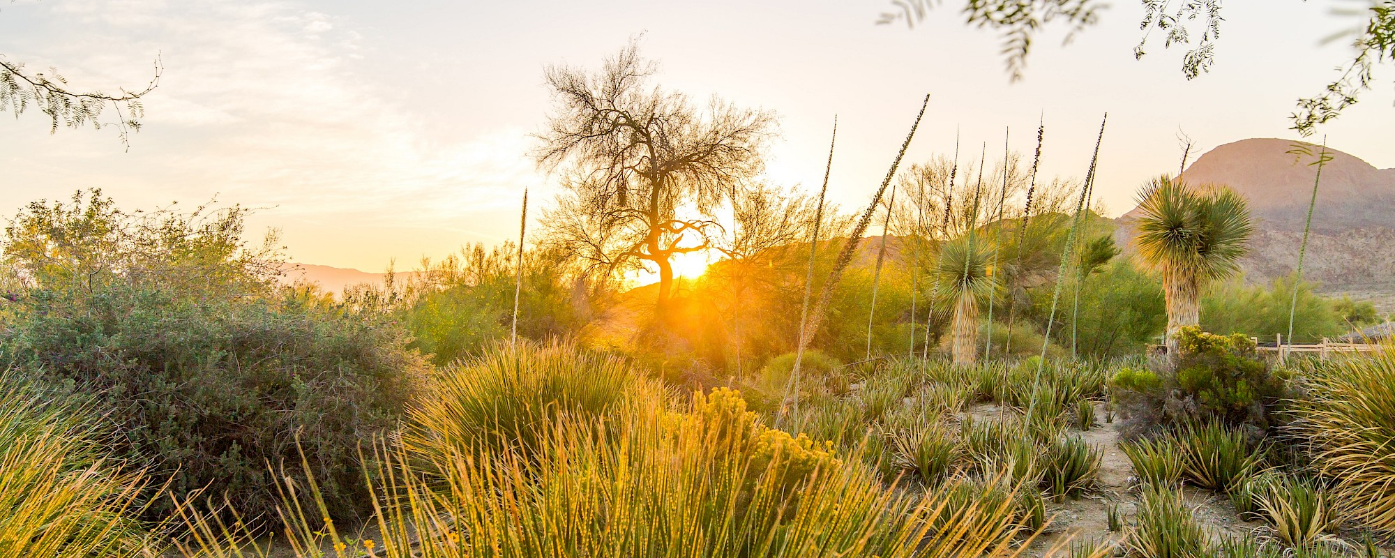 Enjoy beautiful sunsets over the horizon when you visit The Living Desert Zoo and Gardens.