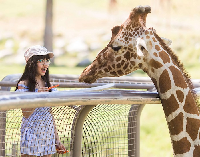 Feed a giraffe at the Living Desert Zoo and Gardens. Click for more details.