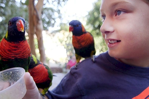 Visit lorikeets, the winged wonders at the Living Desert Zoo and Gardens. Click for more details.