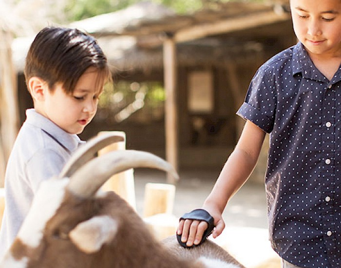Visit the petting kraal at the Living Desert Zoo and Gardens. Click for more details.