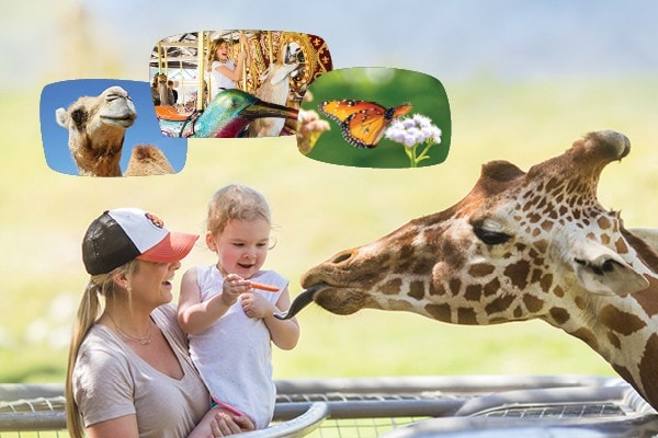 Total adventure package at the Living Desert Zoo and Gardens. Click for more details.