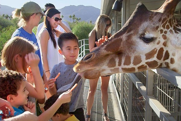 Behind-the-scenes tours at The Living Desert Zoo and Gardens. Click for more details.