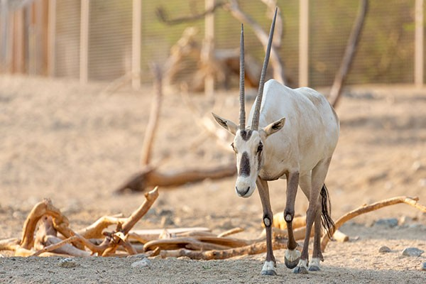 Click to learn more about financial grants and support at The Living Desert Zoo and Gardens.