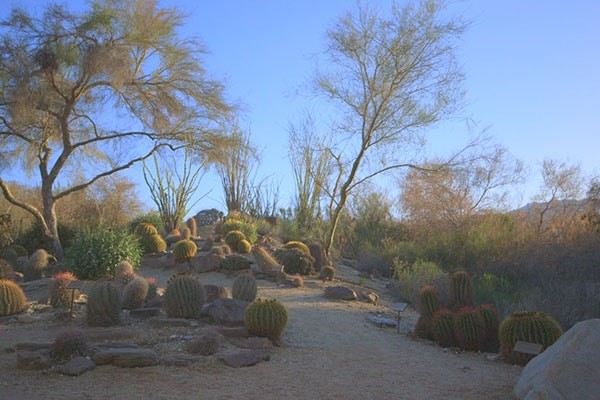 The Living Desert preserves 1,120 acres if Sonoran Desert.