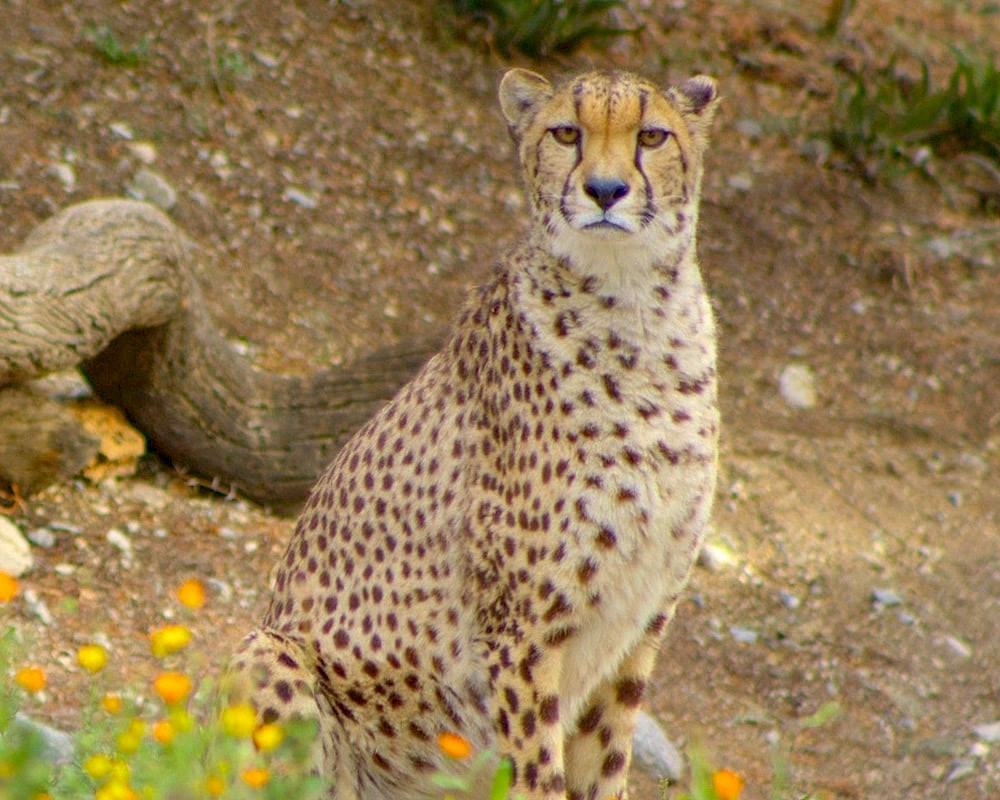 Learn what we're all about at The Living Desert Zoo and Gardens.