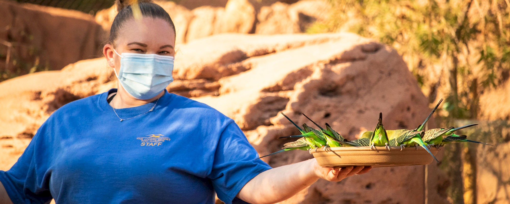 Job opportunities at The Living Desert Zoo and Gardens.