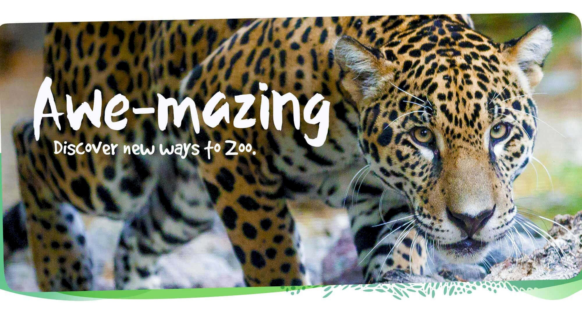 Discover awe-mazing new ways to zoo at The Living Desert Zoo and Gardens. Click for more information.