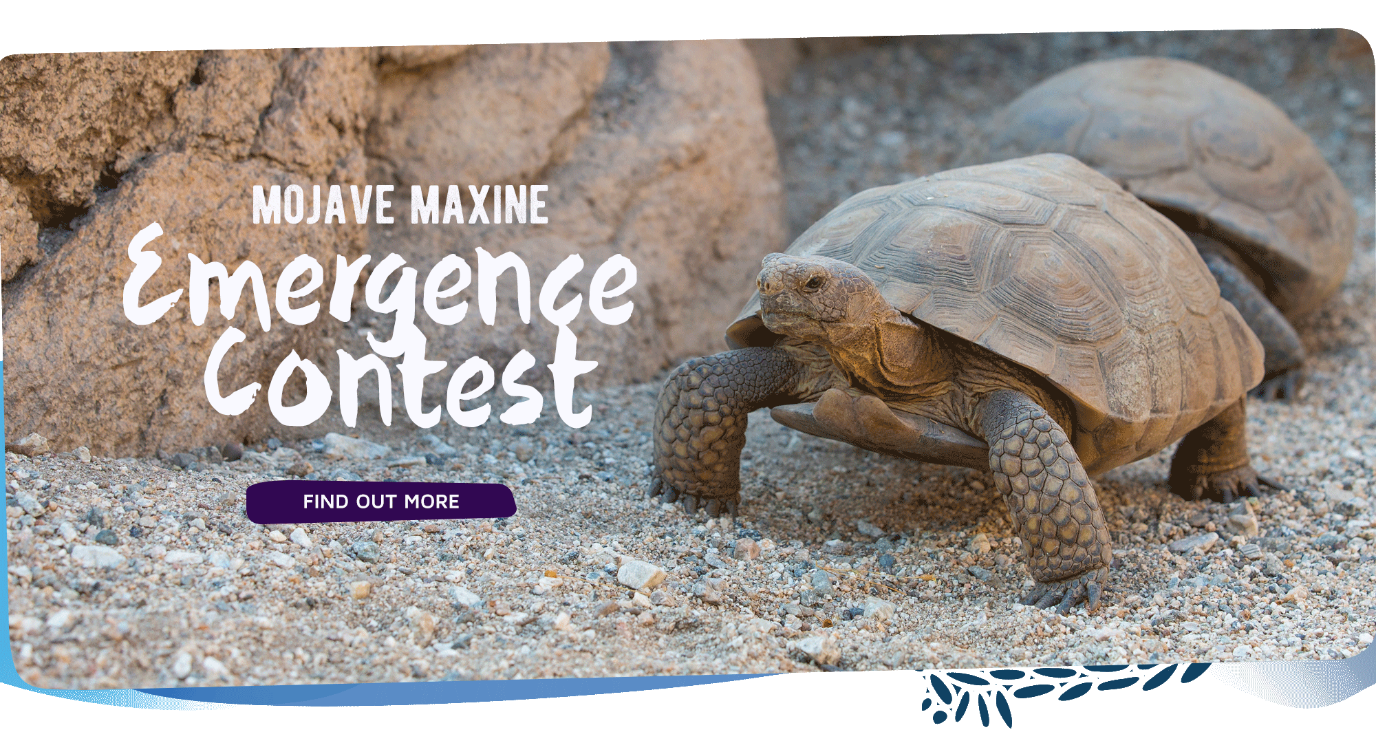 Mojave Maxine Emergence Contest. Click to find out more.