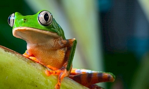 Frog in the rain forest