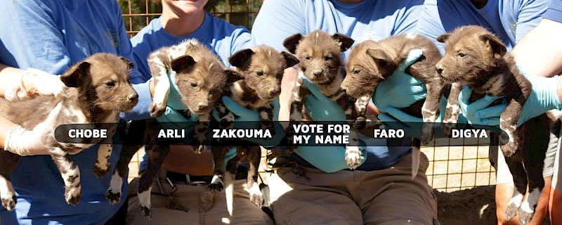 African Wild Dog Puppies and their names
