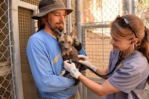 Dr. Goodnight with African Wild Dog Puppy