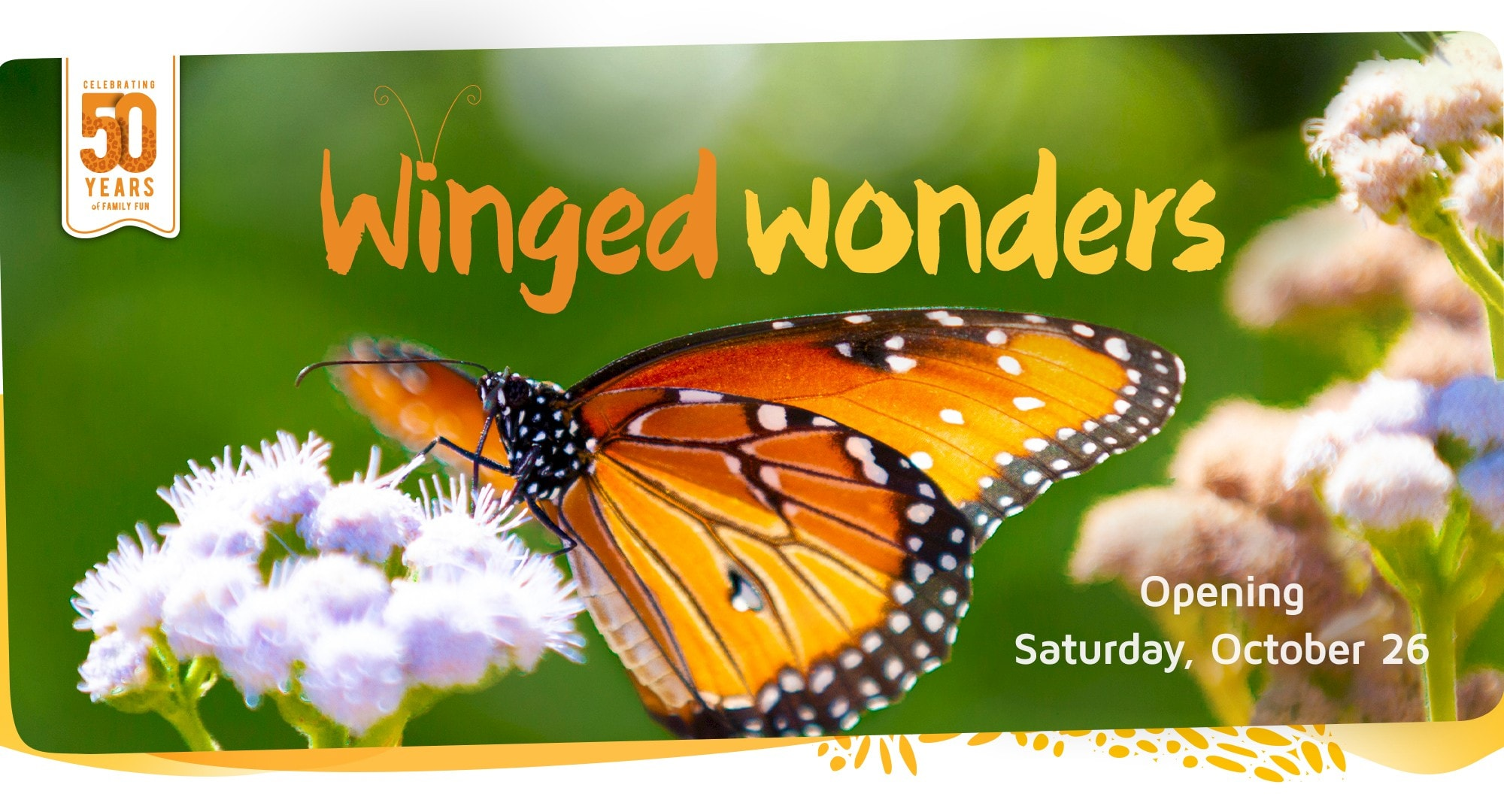 Experience the extraordinary world of Butterflies and Hummingbirds. Click for more information.