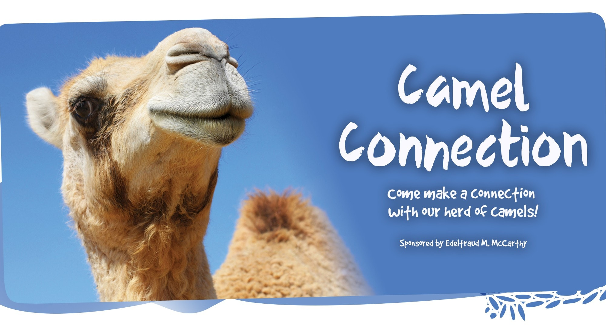 Come make a connection with The Living Desert's herd of camels