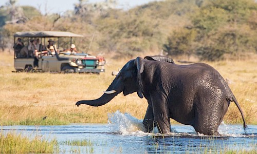 on safari in botswana with elephants