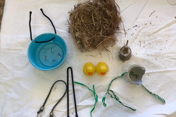 Re-nesting supplies plus a cup shaped bird nest and hummingbird nest for scale.