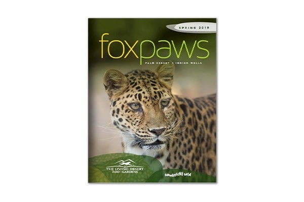 Foxpaws | Spring 2019