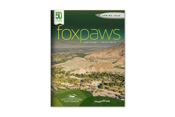 Foxpaws | Spring 2020