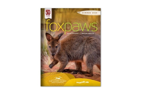 Foxpaws | Summer 2020