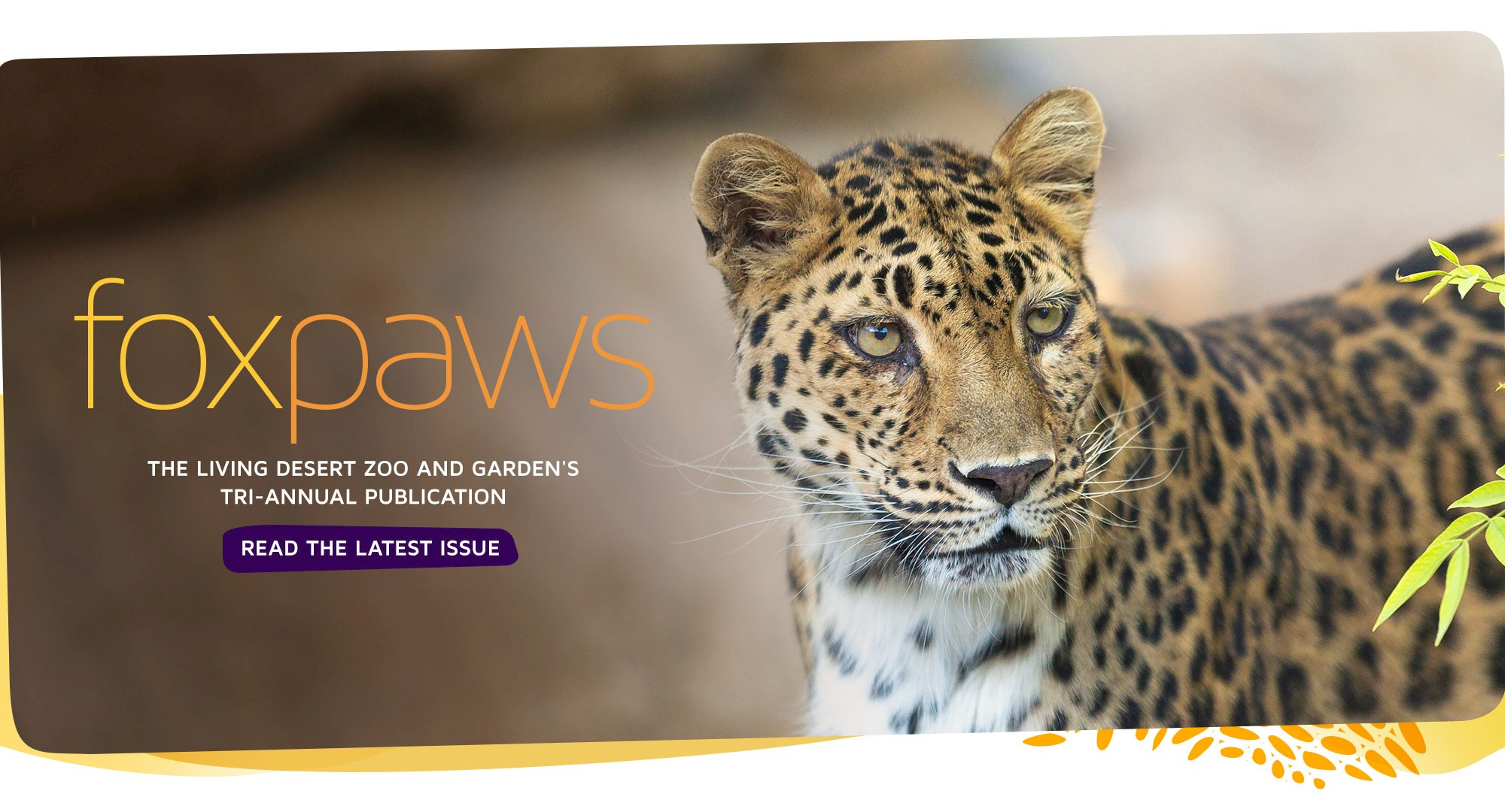 foxpaws | The Living Desert Zoo and Garden's tri-annual publication