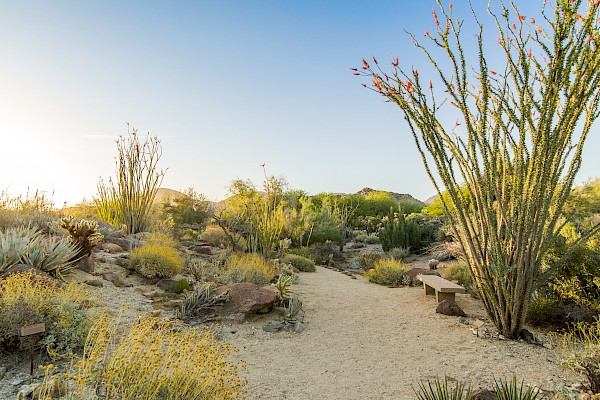 Stroll the Discovery Loop, a flat, sandy trail through a palo verde and smoketree desert woodland. (0.5 mi).