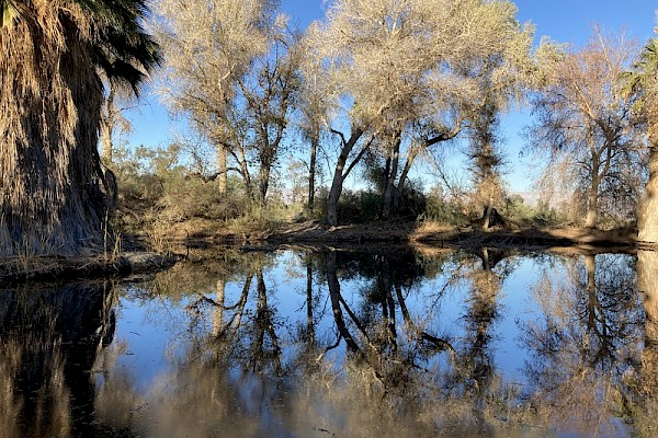 Sonroan Pond today: An expansive saltwater desert pupfish oasis.